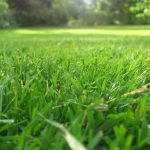 Reseeding Your Lawn in the Fall