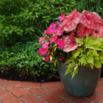 HOW TO GROW TROPICAL PLANTS IN CONTAINERS